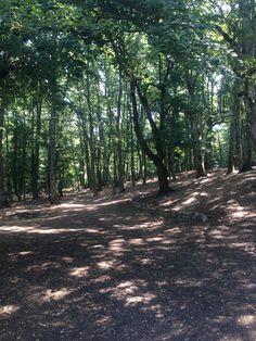 Il bosco di Castelfranco in Miscano