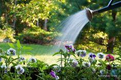 Garden irrigation methods, ranked by efficiency Irrigation Methods, Water Irrigation, Water Saving Tips, Pot Jardin, Self Watering Planter, Garden Nursery, Organic Gardening Tips, Garden Care, Water Plants