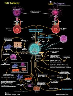How the body fights an infection Biology Memes, Biology Lessons, Maths In Nature, Antigen Presenting Cell, Host Defense, Chemistry Classroom, Medical Laboratory Science, Science Facts, Medical Information