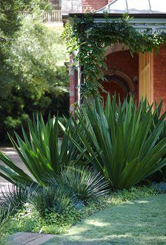 Awesome 36 Elegant Coastal Gardens Design Kdeas That Like A Paradise. House Landscape, Landscape Design, Garden Design, Outdoor Plants, Outdoor Gardens, Prado, Australian Native Garden, Front Yard Design, Coastal Gardens