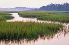 tidal marsh, Edisto Island, SC, Doug Hickok all rights reserved - Google Search