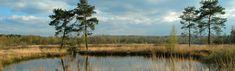 De Maten, natuurgebied tussen Genk en Hasselt (vooral heide en moeras, mooi in september)