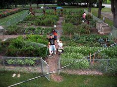 Az elsõ hazai közösségi kert