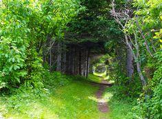 The Coastal Hike in Forillon National Park, Quebec - Hike Bike Travel Sequoia National Park, Banff National Park, Wonderland Trail, Ontario Parks, Tree Tunnel, Hiking Places, Canada National Parks, Destinations, Destination Voyage