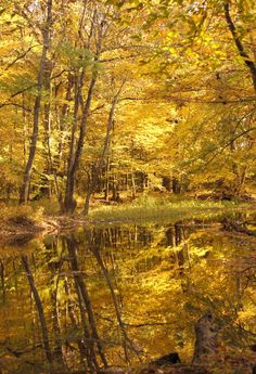 Autum Gold, Belle Mina, Alabama (by danirez) Alabama Outdoors, Golden Days, Water Reflections, Yellow Leaves, Fall Pictures, Shades Of Yellow, Color Themes, My Favorite Color, The Great Outdoors