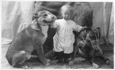 """Intrinseco y expectorante: Cuando los pit bulls eran los perros """"niñeras"""""""