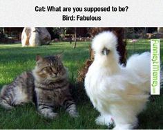 that's actually a silkie bantom chicken...