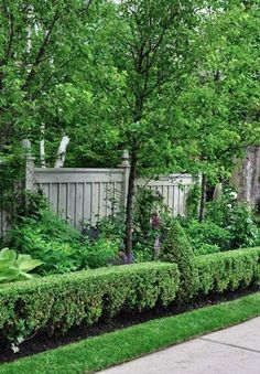 Clipped boxwood hedges with conical accents adds variety to the straight hedge. Description from pinterest.com. I searched for this on bing.com/images