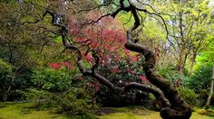 japanese garden free download hd wallpapers Latest Wallpapers, Hd Backgrounds, Old Wood, Beautiful Gardens, Hd Wallpaper, Outdoor Gardens, Lawn, Japanese, Pure Products