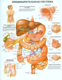 Anatomy Body Parts, Human Body Anatomy, Human Anatomy And Physiology, 500 Calorie Workout, Nursing Courses, Human Body Systems, Medical Anatomy, Coconut Health Benefits, At Home Workout Plan