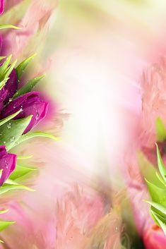 Flower Background Wallpaper, Flower Phone Wallpaper, Frame Background, Background Vintage, Tumblr Backgrounds, Flower Backgrounds, Wallpaper Backgrounds, Powerpoint Background Design, Background Design Vector