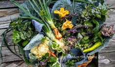 Garden Harvest...May 19, 2016  Two cauliflowers, red cabbage, green cabbage, squash blossoms, onions, peppers, baby carrots and assorted herbs.