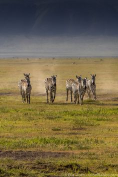Take your kids on a family safari to Africa! This is what we did over the course of 15 days on a family-friendly safari in Kenya and Tanzania. African Animals, African Safari, African Vacation, Africa Travel, North Africa, Zebras, Vacation Trips, Tanzania, Travel Around The World