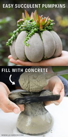 Succulent Pumpkin DIY The concrete succulent pumpkin planters are so easy to make! Fill tights with concrete and attach rubberbands! Thank plant a succulent inside!