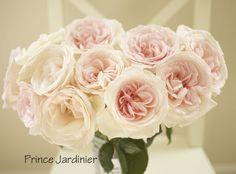 The Blush Pink Rose Study - Prince Jardinier (great fragrance, short vase life)