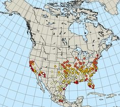 You can follow the migration of monarch butterflies on this site>