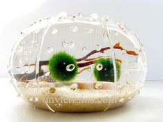 Marimo Moss Ball Glass Urchin Aquarium / Terrarium with wood stopper: Several Different Colors Available