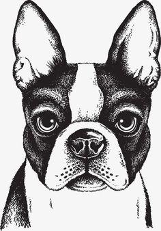 Black and white vector sketch of a fawn Boston Terrier's face - comprar este(a) imagem vetorial de banco no Shutterstock e encontrar outras imagens. Boston Terrier Love, Boston Terriers, Boston Terrier Kunst, Terrier Puppies, Boston Terrier Tattoo, Bulldog Puppies, Animal Drawings, Cute Drawings, Boston Art