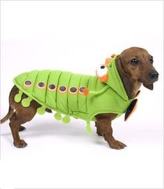 """Caterpillar Costume For Dogs - Size 5 (14"""" l x 18.5"""" - 20.5"""" g) - http://www.thepuppy.org/caterpillar-costume-for-dogs-size-5-14-l-x-18-5-20-5-g/"""