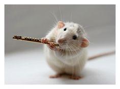 rat flauta
