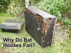 Why Do Some Bat Houses Fail? This is from a bat conservation website. Look here for plans too Build A Bat House, Bat House Plans, Bird House Kits, Building Bird Houses, Bird Houses Diy, House Building, Bat Box Plans, All Bat, Animal House