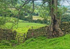 Green Green Green Nidderdale, Yorkshire Dales, England