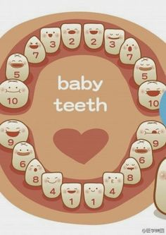 Baby Teeth Growing Sequence #dentist - Natalie Lenser, DDS | #Modesto | #CA | www.toothfairyteam.com