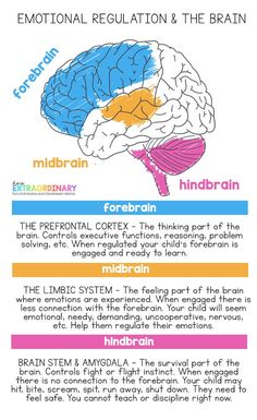 Diagram of the three regions of the brain = forebrain, midbrain, and hindbrain. Explains how emotional regulation affects brain function. # How to Talk to Kids About Difficult Topics Coping Skills, Social Skills, Life Skills, Brain Facts, Brain Anatomy, Health Activities, Play Therapy Activities, Brain Science, School Social Work