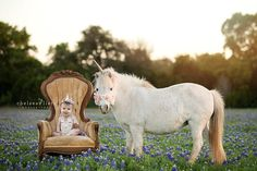 unicorn horn for horses and ponies for photography sessions!