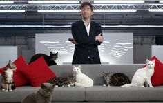 VIDEO: David Tennant Narrates Anti-Stress Films For Cats And Dogs     David Tennant provides the soothing narration to a pair of films specially designed to bring calm to our beloved furry four-legged frien...