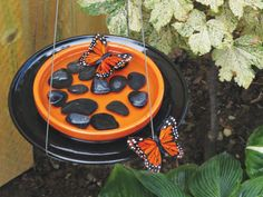 Learn how to make a butterfly feeder with the DIY Network.