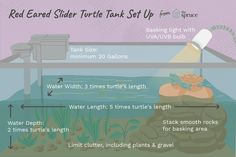 Tank Setup for Your Pet Red-Eared Slider Turtle