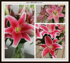 #lily #flowers