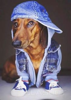 Doxies are way cool Mais
