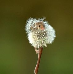 Hamster in dandelion Cute Creatures, Beautiful Creatures, Animals Beautiful, Cute Baby Animals, Animals And Pets, Funny Animals, Small Animals, Wild Animals, Photo Animaliere