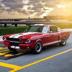 Mustang GT 350                                                                                                                                                                                 More
