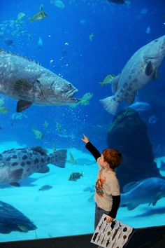 Kids Of All Ages Come Face To Fin With 500 Pound Goliath Grouper At Georgia Aquarium