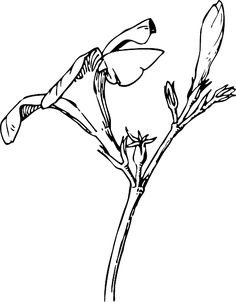 http://www.pd4pic.com/images/black-drawing-plants-tree-flower-white-flowers.png