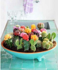 Love cactus!