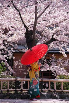 Cherry blossoms and kimono