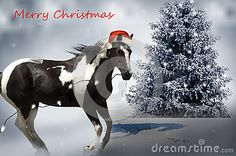 Photo about Horse decorating a tree with lights wearing a Santa hat in the snow. Image of stable, lights, season - 78735694 Christmas Photos, Christmas Cards, Merry Christmas, Christmas Horses, Tree Lighting, Santa Hat, Snow, Seasons, Stock Photos