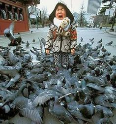 This poor kid...I hope someone saved him from the bird mob. LOLO