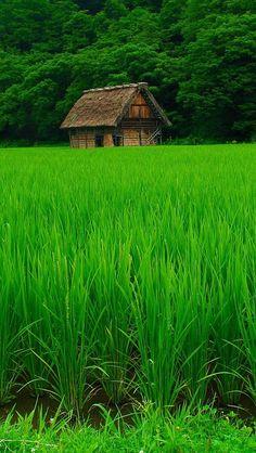 grass_lawn_beautiful_summer_84334_640x1136