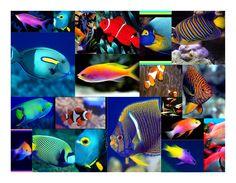 Google Image Result for http://treasuretroveblog.com/wp-content/uploads/2010/07/colorful-fish.jpg