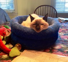 """""""Love is...a safe warm sleep spot...""""  10 Guilt-Free Ways to Love Pets with #HillsPet"""