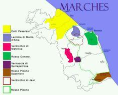 Italian wine regions : Marches