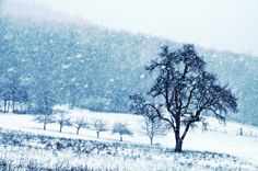 Old pear tree (cool edition) Canvas Print  Same pic like here: https://society6.com/product/old-pear-tree-on-a-wintery-meadow_print#1=45 but toned in blue to make it a bit cooler  This single pear tree is standing on a mountain meadow which is used as a pasture for sheep. Nature, season,  winter, snow, snowflakes, grassland, lined trees, mountain, landscape,white