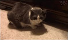 Fill your day with laughter with this collection of 14 Grabby Gifs of Greedy Animals