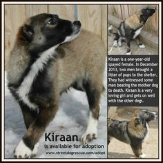 If you are interested in adopting Kiraan please visit our website http://www.streetdofrescue.com/adopt and fill out an application form!