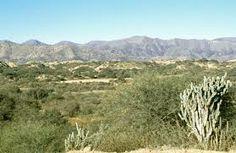 Sabana y bosque tropical seco presenta clima cálido durante todo el año, con temperaturas entre los 25 y los 30 °C.  En la costa del Pacífico de Ecuador y Perú está el Bosque seco ecuatorial, que debido a su aislamiento alberga gran cantidad de endemismos, al igual que las de África sudoriental, Bosque seco de Madagascar y de Nueva Caledonia. Pueden llegar a tener incendios